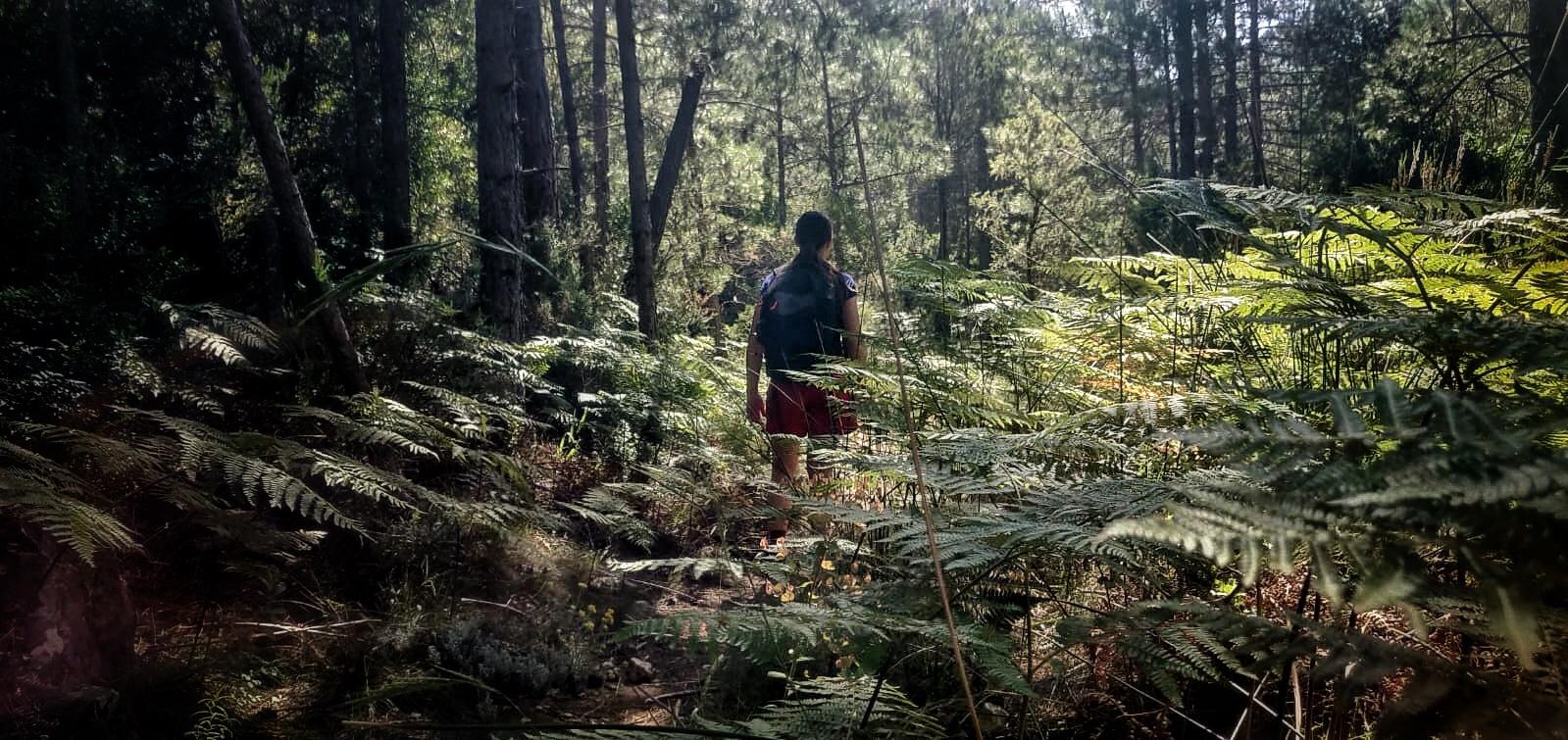 La importancia de estar en el camino, persona caminando por el bosque