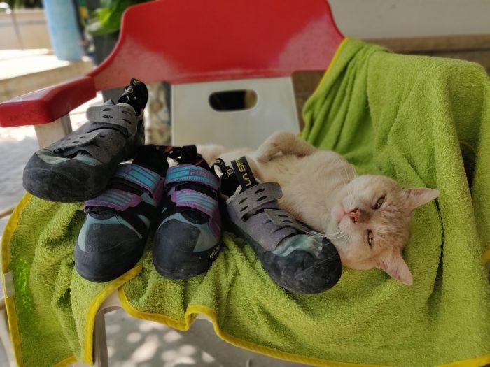 Pies de gato con gato - escaladayferratas.com